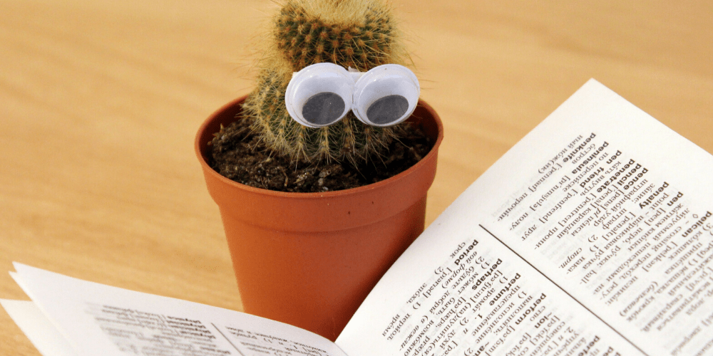 Cactus with googly eyes reading
