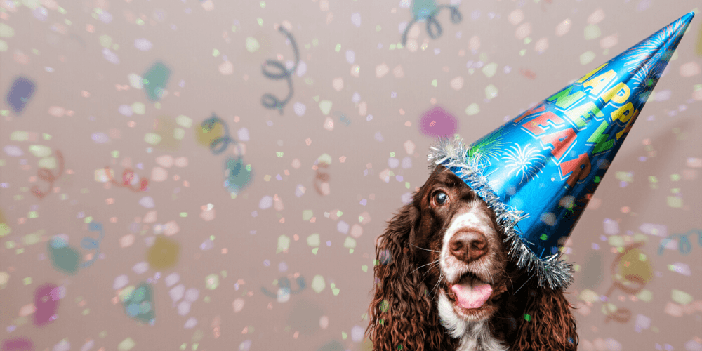 Dog celebrating new years